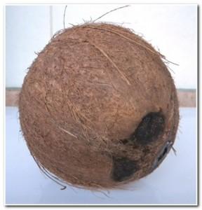Ralando coco