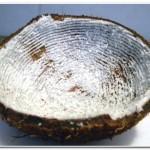 Dica como ralar coco (6)