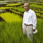 Incrível esta arte no arrozal
