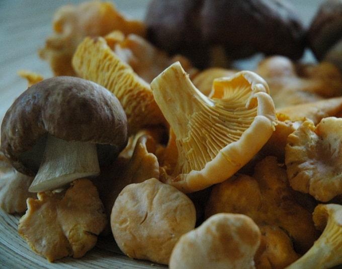 Benefícios de comer cogumelos